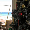 Pining for Christmas Trees in Barbados