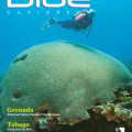 Barbados Featured in Blue Caribbean Dive Magazine