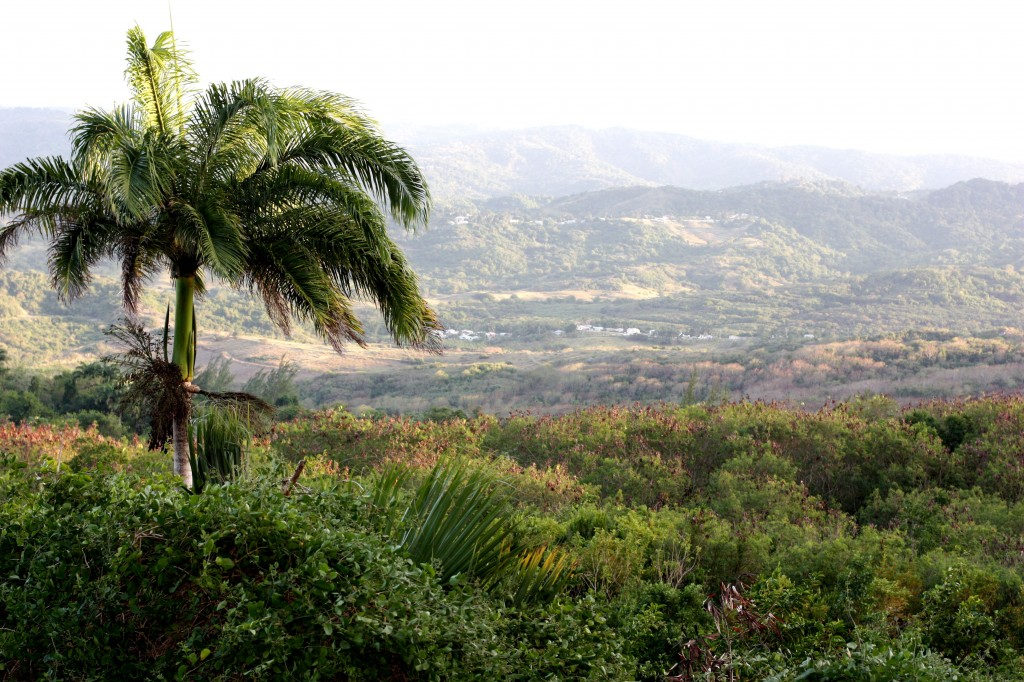 The beauty of Barbados, as seen from Farley Hill. Here is the Scotland District, so called for obvious reasons.